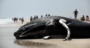 Week in wildlife: Whale Washes Ashore On Long Island Beach