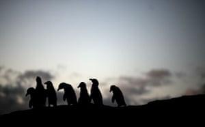 Week in wildlife: Penguins At Boulders Beach In Cape Town