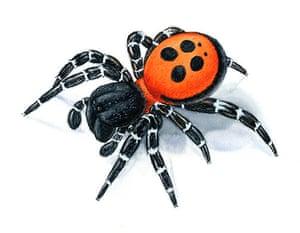 Endangered Species: Ladybird Spider