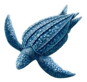 Endangered Species: Leatherback turtle
