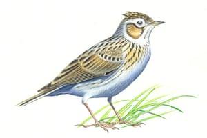 Endangered Species: Skylark