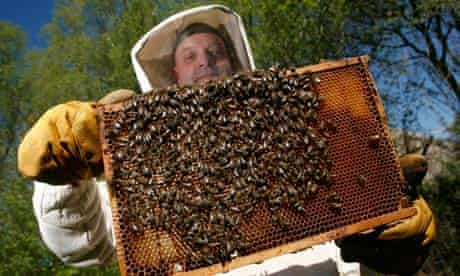 A bee-keeper holds up a honeycomb full o