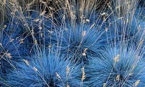 Gardens: Grasses