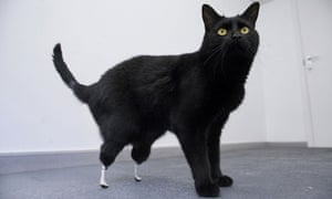 Cat with a pair of prosthetic paws
