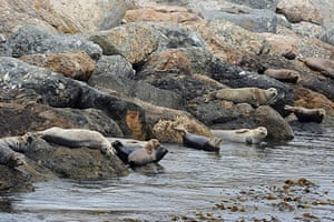 Week in wildlife: Harbor seals lazing at the base of the breakwater in the Port of LA