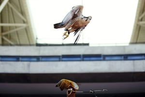Week in wildlife: Arnold Slabbert releases his peregrine falcon
