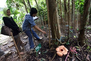 Week in wildlife: Plant researchers stand near a rafflesia patma flower