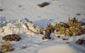 Deepwater Horizon: Aftermath of the Deepwater Horizon Oil Spill,