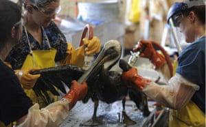 Deepwater Horizon: Technicians with the Fort Jackson Oiled Wildlife Rehabilitation Center