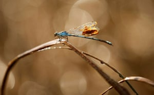 Deepwater Horizon: A dragonfly tries to clean itself