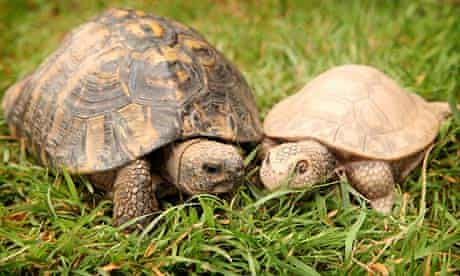 Timmy the tortoise with Tanya the plastic toy