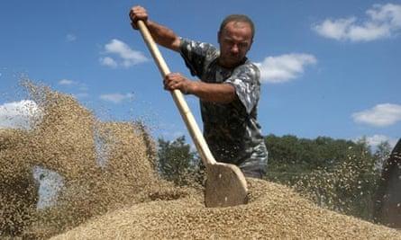 ukraine grain farming