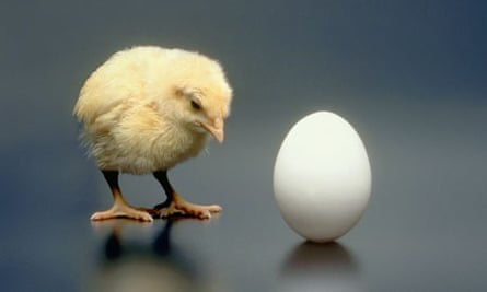 which came first teh chicken or the egg