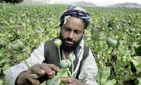 Afghan farmer with opium crop