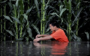 China floods: A man struggles as he wades through a flooded field in Tieling county, Liaoning province