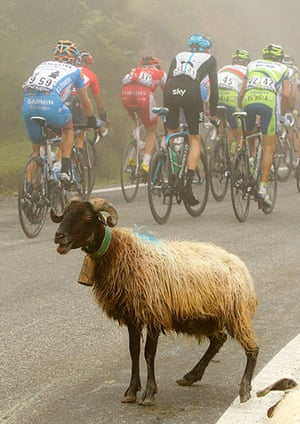 sport: The pack of riders