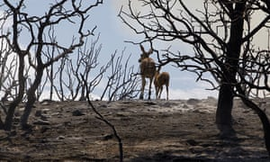 Week in Wildlife: A mule deer and her fawn make their way through a burnt out canyon