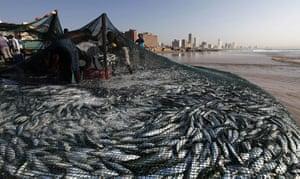 Week in Wildlife: Fishermen empty nets of sardines on Durban's Addington beach