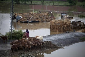 Pakistan floods: A Pakistani gypsy family take care of their livestock