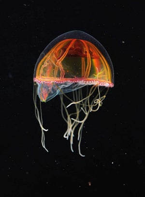 deep-sea species: Scientists return with more than 10 possible new species