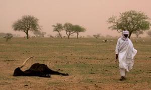 Niger famine