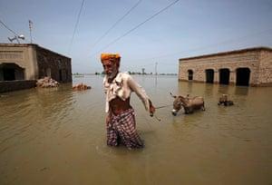 Pakistan Flood Disaster: Villager Ali Mardan leads his two donkeys through floodwaters in Pakistan