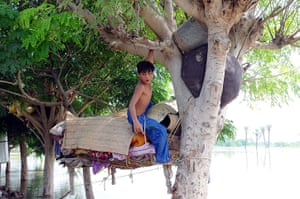 Pakistan flood victim takes shelter in a tree