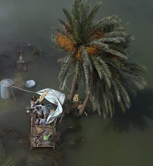 Pakistan flood survivors: Flood victims, seen from an Army helicopter, take refuge under a date tree