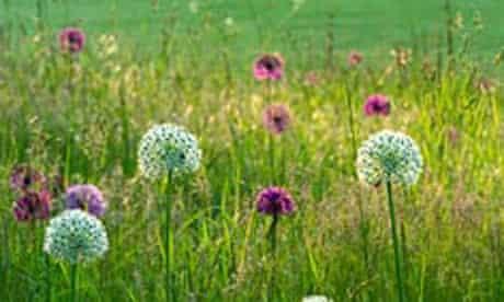 Gardens: Alliums