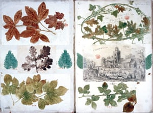 Impressions of Nature: Book Review : A History of Nature Printing