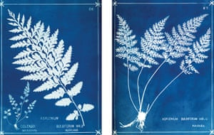 Impressions of Nature : Book Review : A History of Nature Printing