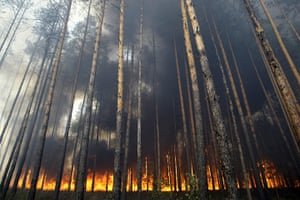 Forest fires in Russia: Flames travel along the floor of the forest