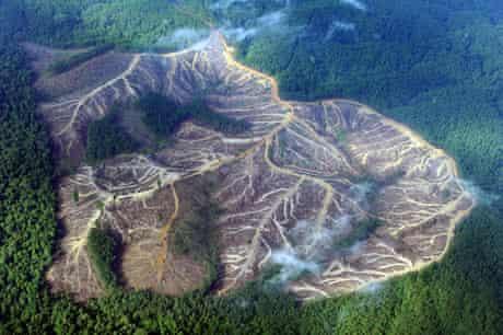 Eyewitness: Deforestation in Sumatra