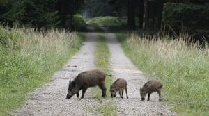 Week in wildlife: Wild boars stroll at a forest in Eglharting near Munich