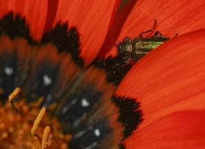 Week in wildlife: Namaqualand wild flowers in South Africa