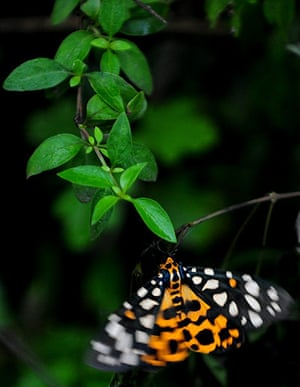 Week in wildlife: A butterfly feeds on the stem of plants