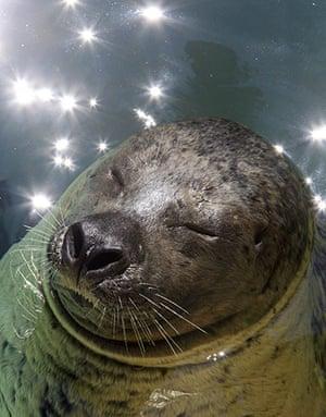 Week in wildlife: harbor seal