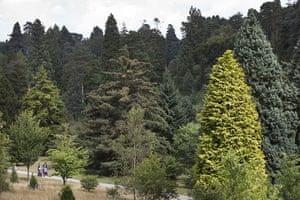 Week in wildlife: Trees in Bedgebury Pinetum