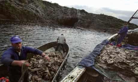 Men returning from gannet hunting on Sula Sgeir island, Scotland.