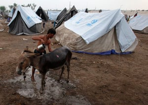pakistan aftermath: A flood victim washes his donkey outside his tent