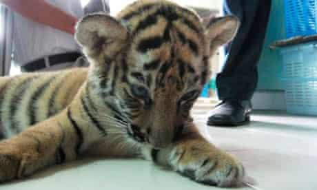 Tiger cub rescued at Bangkok airport