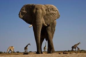 elephants: Elephants Photographed From Underground Bunker