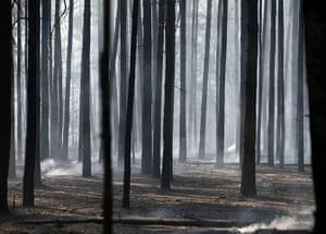 russian fire update:  trees is seen filled with drifting smoke on the outskirts of  Voronezh
