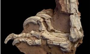 Dinosaur fossils found in Romania