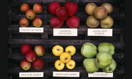 English apple varieties