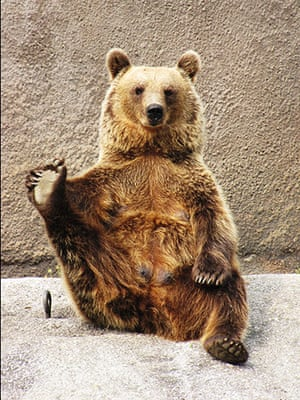 Brown bear Yoga: 4 Female Brown bear doing her early morning Yoga