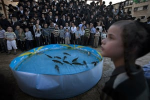 Yom Kippur: Ultra-Orthodox Jews pray in front of a plastic pool of live fish