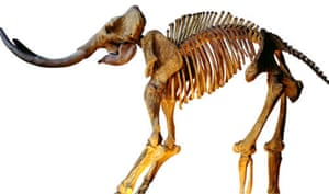 The 10 best ebay : 50,000-year-old woolly mammoth