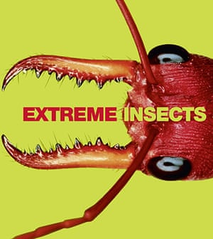 Book Review: Extreme Insects by Richard Jones published by HarperCollins