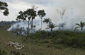 Biodiversity 100: burning area near Novo Progresso in Brazil's northern state of Paral